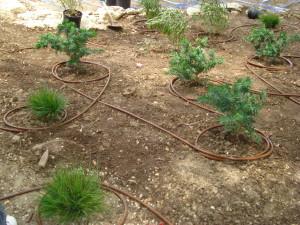 drip-irrigation-boerne-tx-300x225