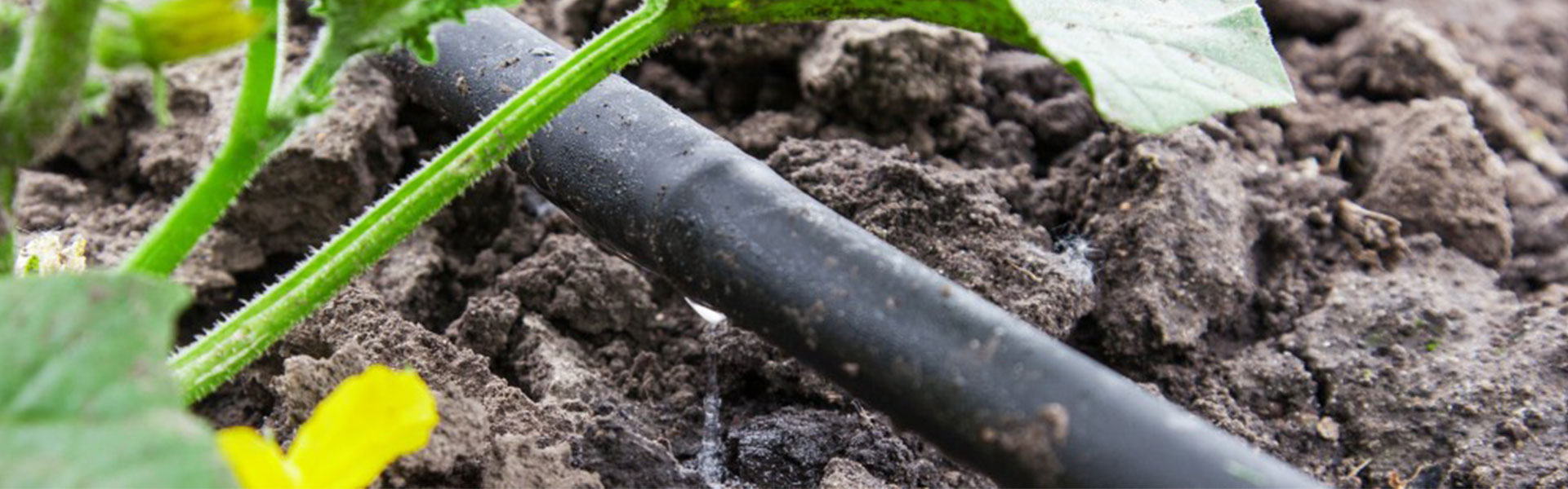 Drip Irrigation System San Antonio Tx H3o Water Systems